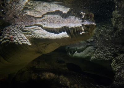 Croc (1 of 1)
