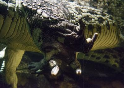Croc3 (1 of 1)